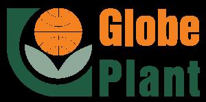 Globe Plant
