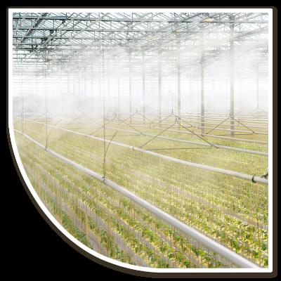 Paprikaplanen in de nevel, Globe Plant staat voor kwaliteit